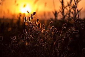 erba e fiori al sole