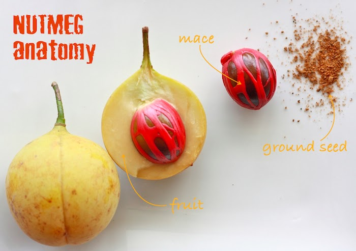Spices Unearthed: Nutmeg (and Mace) | Season with Spice