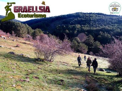 Observación del Lobo Ibérico en la Sierra de Guadarrama