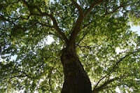 Bosques, Autoctonos, Ecologistas en accion, Cambio climatico,