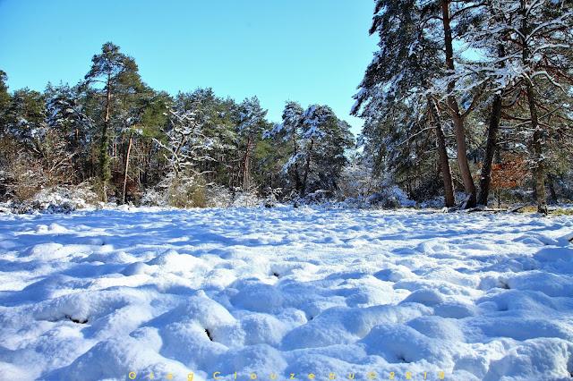 Gorges d'Apremont, Forêt de Fontainebleau, sous la neige 2018