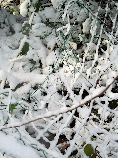 picture of a snowy fence