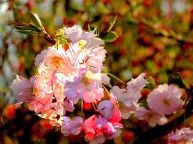 花(素材使用)
