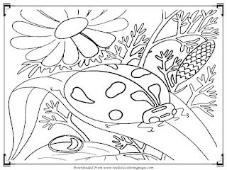 printable lady bugs adults coloring pages free