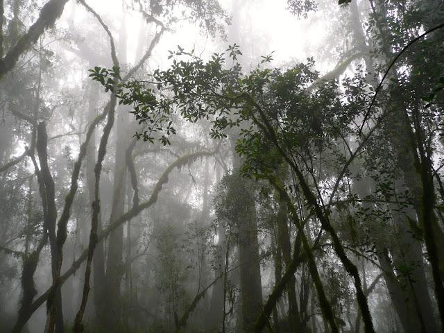 Nebbia Foresta Tropicale