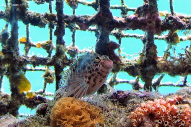 沖縄のかわいい魚