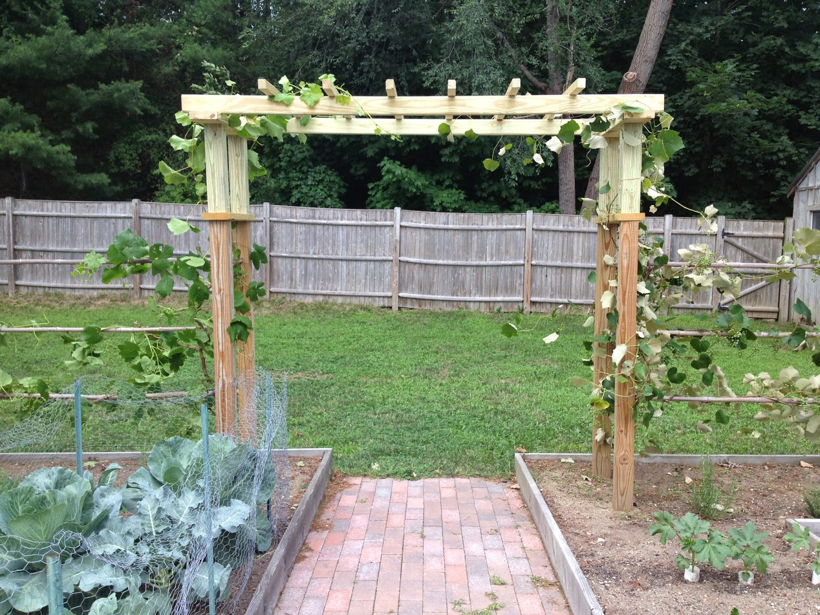 Finishing the grape arbor - How to build a grape vine support the natural roof ...