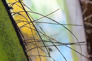 Coconut Tree Abstract