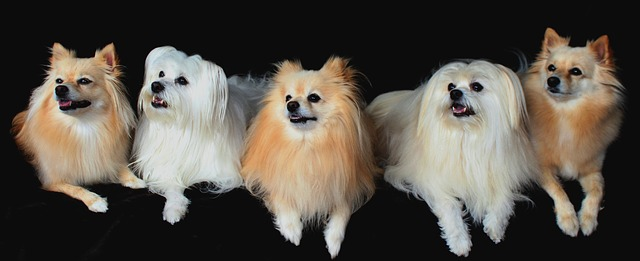 Top 10 Popular Small Dog Breeds In The World.