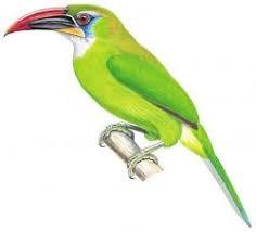 endemic birds Venezuela