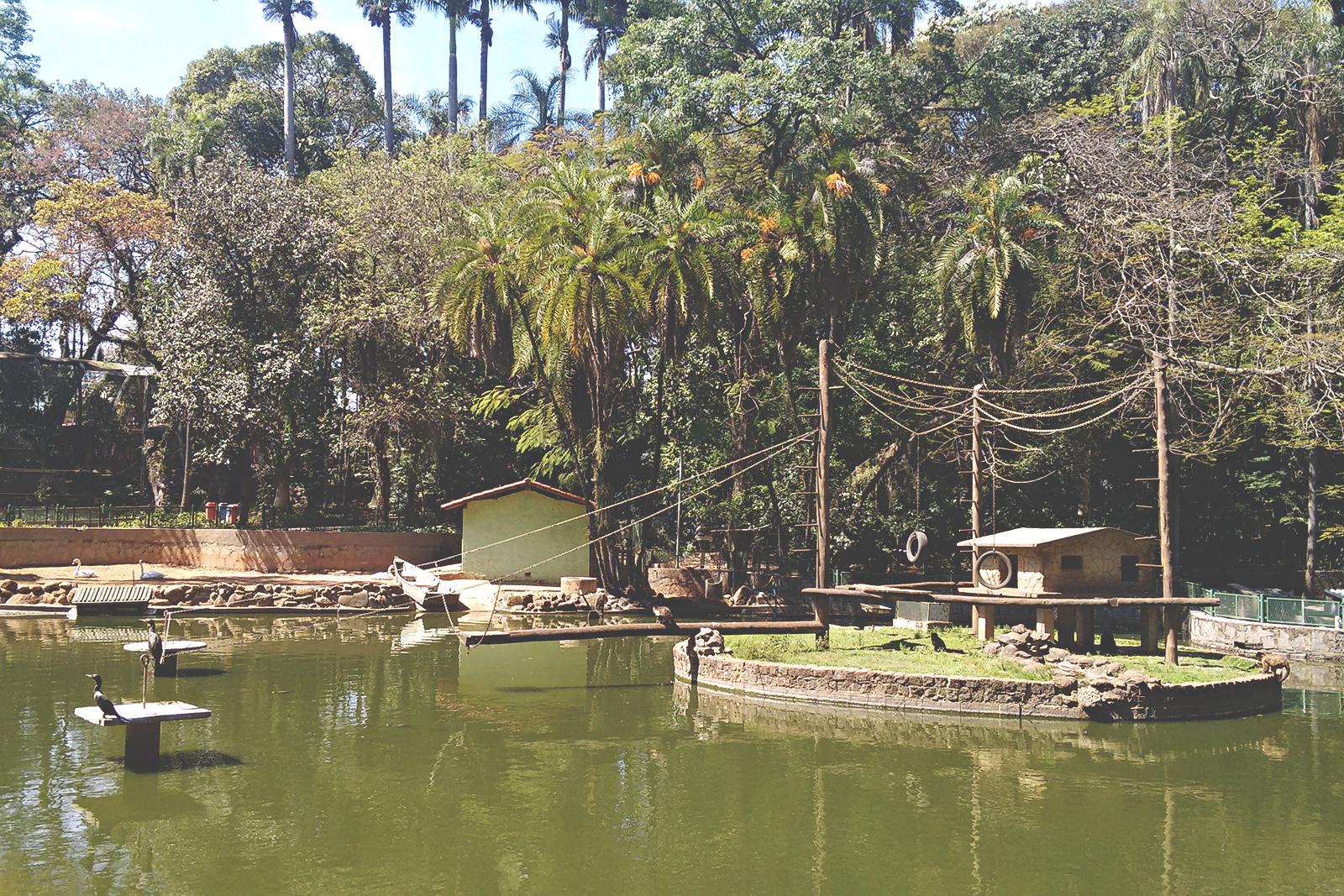 macacos zoológico campinas