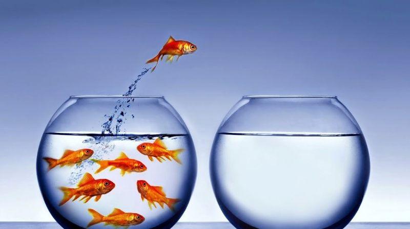 Resultado de imagem para pescando no mesmo aquario