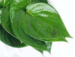 cara mengobati luka bakar dengan menggunakan daun sirih