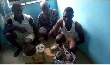 Police arrest herbalist who cut off lady's breast in Ogun