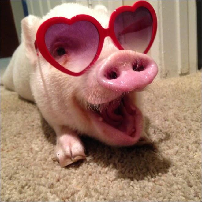 Fotos de porquinho fofinho