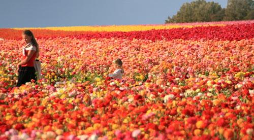 7 Taman Bunga Terindah Bagaikan di Surga  Kejadian Aneh