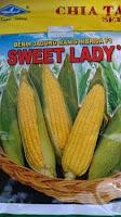 rasa manis, Sweet Lady, Jagung Manis Sweet Lady, tahan bulai, tahan kresek,buah besar,umur genjah,benih,petani, cap kapal terbang, bisi international