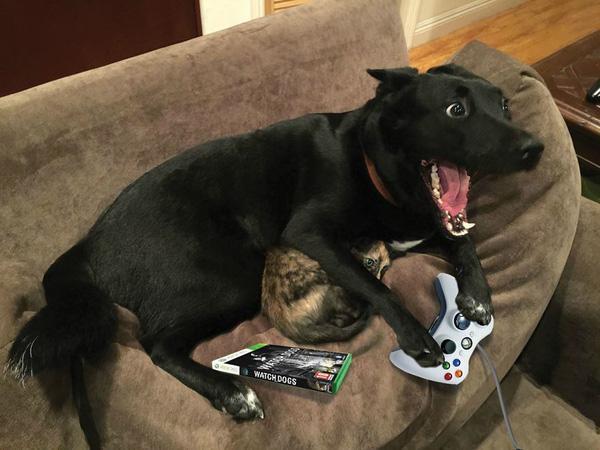 Chú chó nghĩa hiệp bảo vệ mèo con trong sấm chớp