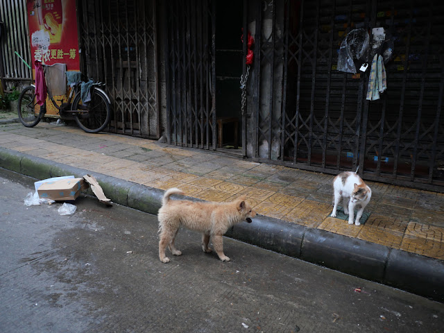 small dog barking at a cat in a defensive posture