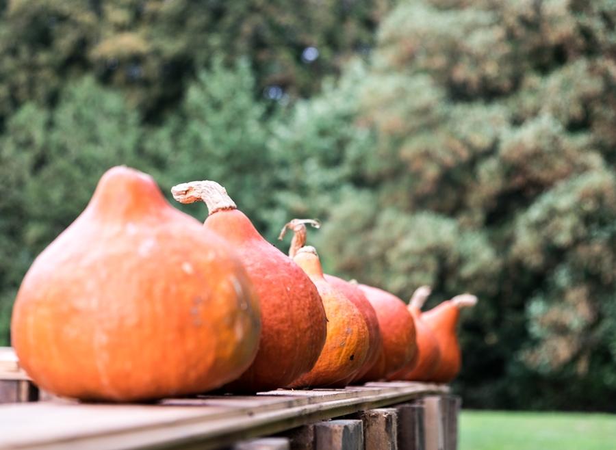fim.works | Fotografie. Leben. Wohnen. | Herbst auf Hof Laer in Herford