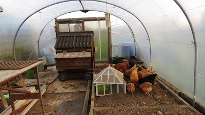 Chickens on the HenSafe Smallholding