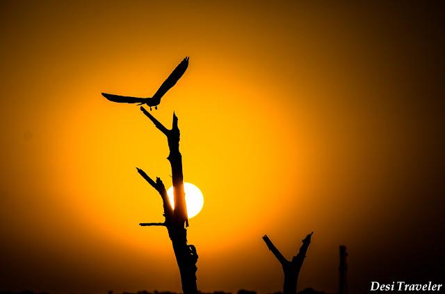 sunset in Tal Chhapar Rajasthan