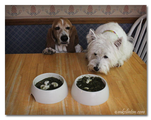 Pierre Westie leans in for a whiff of Dr. Harvey's Paradigm while Bentley Basset looks on.