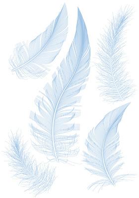 vectores de plumas 4 modelos distintos