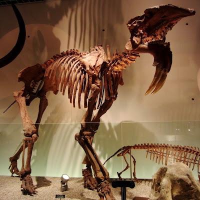 schelet dinoteriu