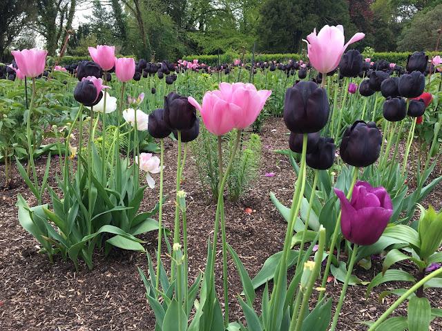 wells gardens ireland