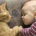 TAHUKAH ANDA??? Jika Di Dekati Kucing Itu Ada 3 Pertanda Dari Allah, Yaitu..