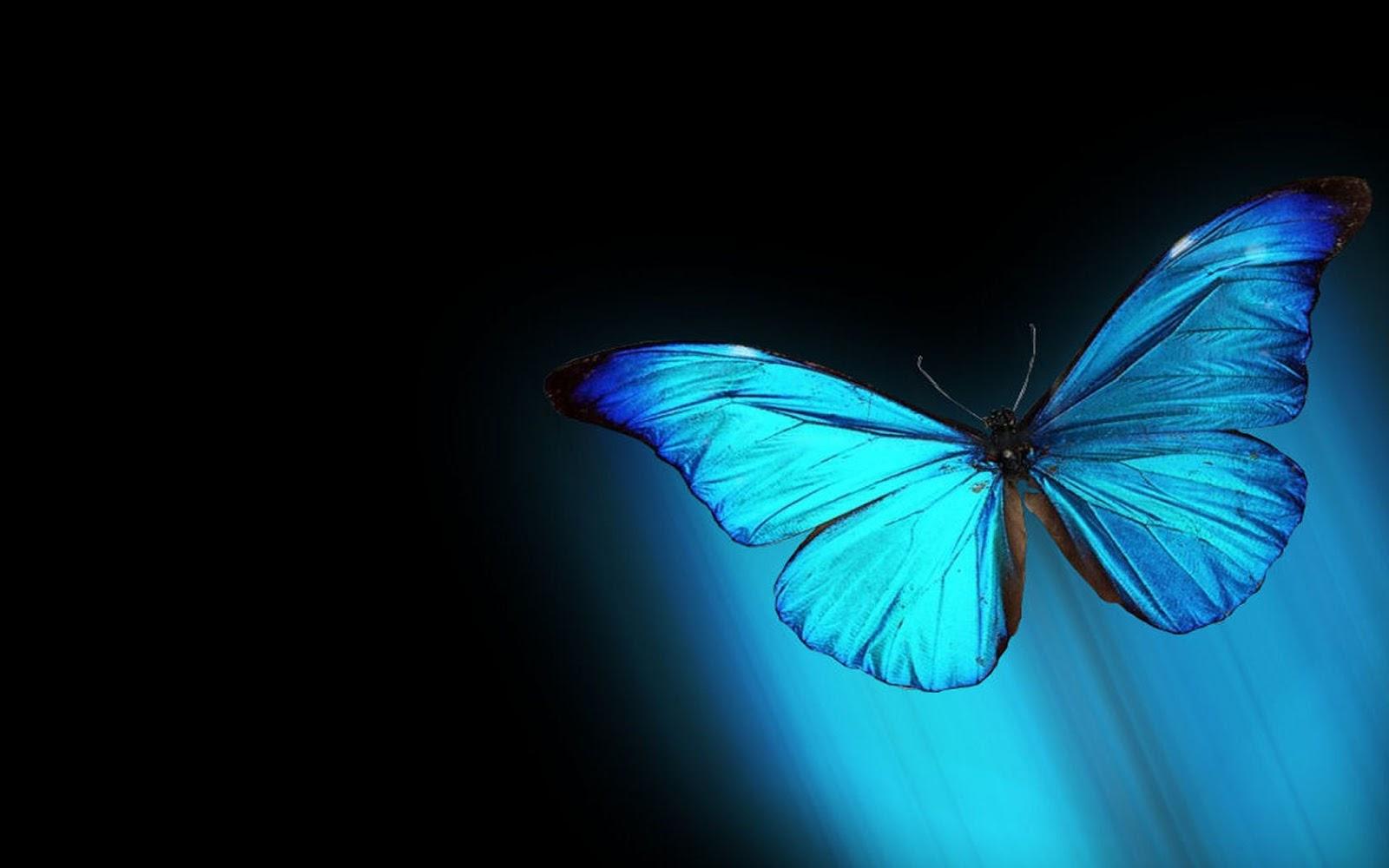Cute Butterflies Hd Wallpapers En G 252 Zel Full Hd Kelebek Duvar Kağıtları Sekizbir