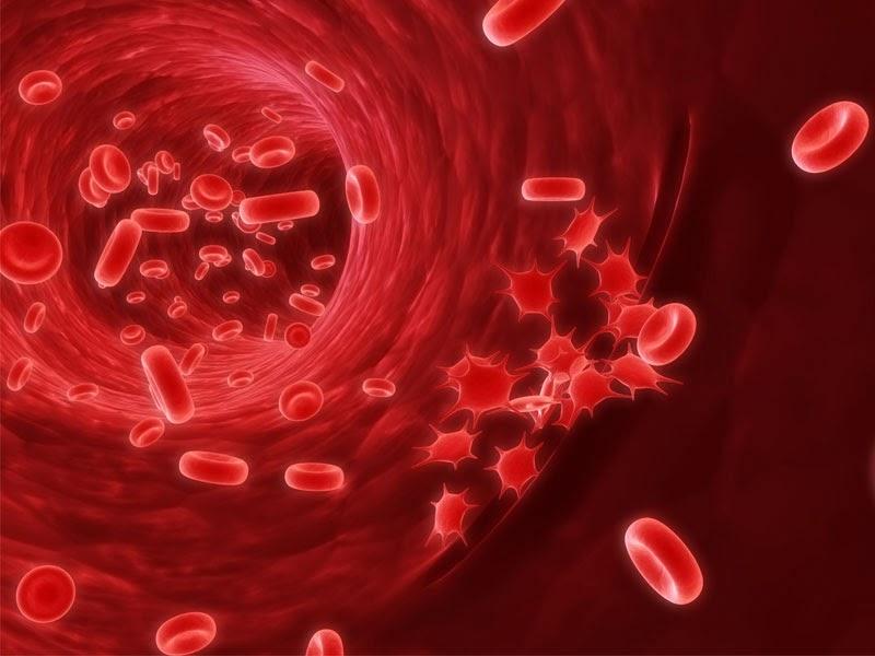 Obat Kanker Darah Herbal