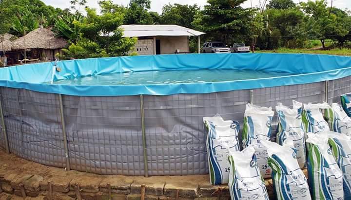 Quihubole entregan proyecto de estanques acu colas para for Proyecto de tilapia en estanques