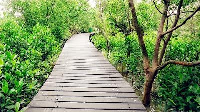 Lokasi wisata di hutan mangrove wonorejo surabaya