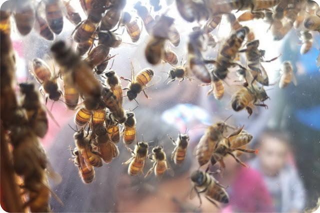 apicoltori a pesaro per bambini