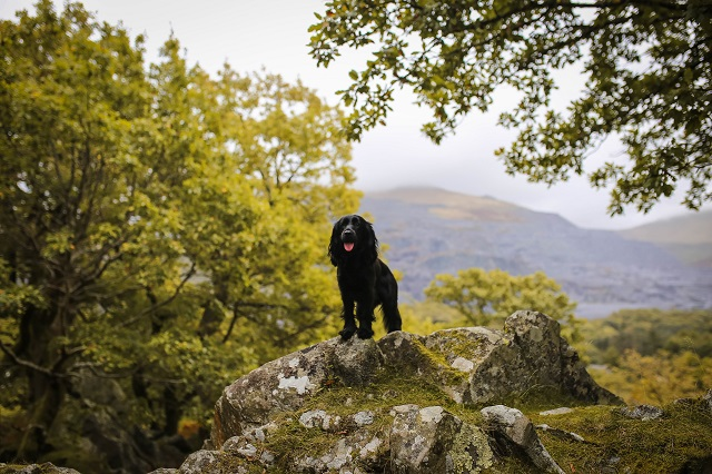 Dog Friendly Wales: Part One
