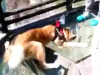 Ketakutan Lewati Jembatan Kaca, Pemilik Anjing Dikecam Netizen