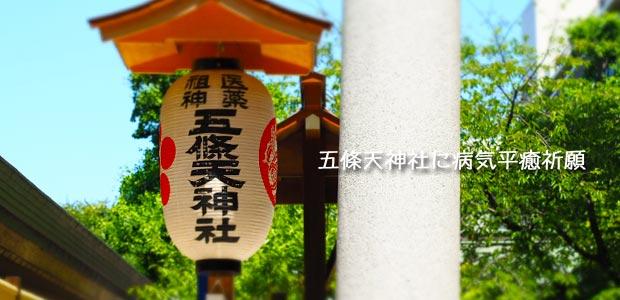 猫の病気の回復,健康や長寿の祈願ができる東京の神 …