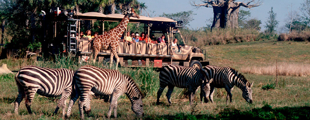 10 destaques do Animal Kingdom em Orlando