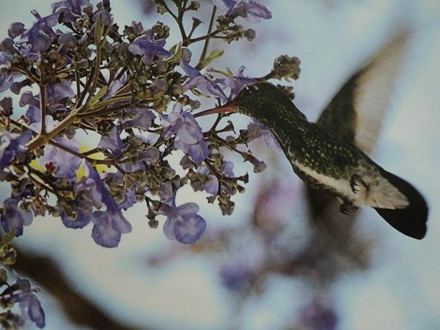 flores, pássaros