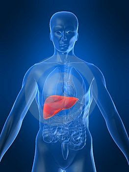 Alimentos aliados da saúde do fígado