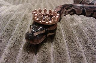 Serpiente reina