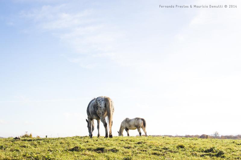 dois cavalos pastando