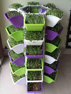 Trồng rau sạch tại nhà chuyên nghiệp với bộ sản phẩm modul vườn tường đứng