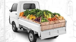 Pictures: Vegetable Vehicles