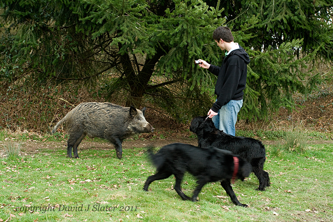 Friends of the Boar: What to do in an Encounter with a Wild Boar