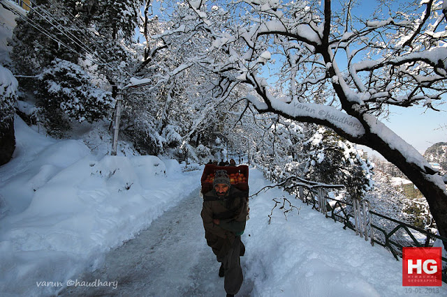 Himachal Pradesh, the Himalayan State of India, has got heavy snowfall during last week. Localites loved the snowfall initially, while various problems are making the life difficult in hills. At the same time, tourist inflow to the state has increased a lot. Max number of tourists are expected to visit Himachal hill stations next week-endTourist spots near Shimla, like Kufri, Fagu and Narkanda experienced snowfall, triggering a rush of tourists in Shimla. Likewise, the Solang ski slopes, located just 13 km uphill from Manali, saw snow turning the hill completely white. Manali had no electricity for 24 hours after snowfall and hopefully today it will be sunny out there Above photograph shows Indira Gandhi Medical College covered with white sheet of fresh snow. (IGMC, Shimla under snow)All these photographs have been shared by Varun Chaudhary except few by Amit Kanwar. Both of them are brilliant photographers from Shimla and have shared great moments with us at PHOTO JOURNEY.High altitude places like Shimla, Manali & Lahaul has seen snowfall while lower areas of the state including Dharamsala, Palampur, Solan, Nahan, Chamba and Mandi received moderate rain, bringing the temperature down considerably.A beautiful photograph of Ridge Ground of Shimla with white snow shining in late evening. There are people out on Mall road on ridge with umbrellasThe temperature has decreased in Himachal Pradesh with Shimla recording a minimum temperature of 3.6 degrees Celsius on Tuesday, down from Monday's 4.3 degrees Celsius. The night temperature in Keylong, the state's coldest place, was 2.9 degrees Celsius below the freezing point. Kalpa saw a low of minus 1.2 degrees, while the temperature was two degrees in ManaliTransportation has impacted big time in areas which have got snowfall. In fact, many of the places are not getting electricity due to brokerage of installed equipments. Appropriate authorities working hard to get out of the state. At various places, water pipes are frozen, so water supply is also creating problems for localities.Snowfall in Shimla is always welcomed by tourists, Hoteliers & local folks. But most of the times, it hit badly the life of local folks when internal transportation gets impacted, electricity & water problems start badly and many other related issues. So snowfall brings mixed emotions for different segments of society. Hotel owners become very happy, labor class also gets more than enough work and can charge more than usually  wages etcHere is a photograph of Jakhu hill covered with snow. All high deodars trees covered with white layer of snow. Check out more stuff at - http://www.flickr.com/photos/himachalgeographic/sets/72157632558096993/