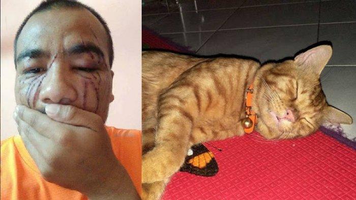 Mengejutkan! Wajahnya Rusak Parah Karena Dicakar Kucing, ini Balasan si Pria untuk Kucingnya