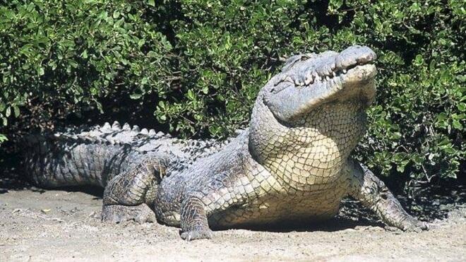 10 Haiwan Paling Berbahaya Di Dunia